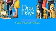 dogday1_thumb.jpg